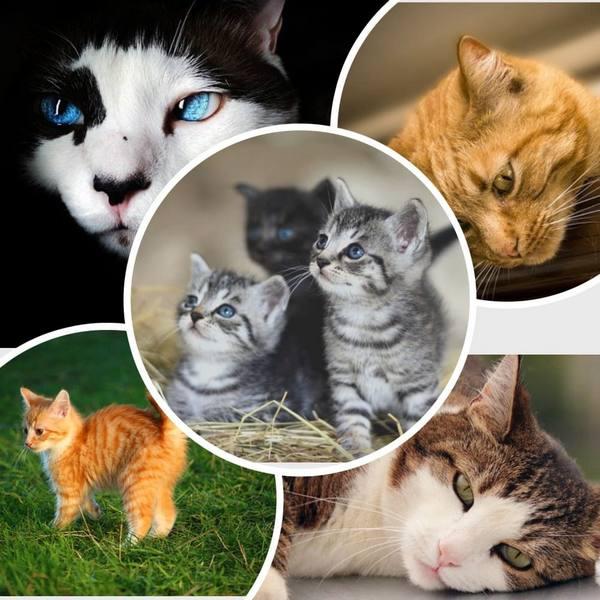 Международный день кошек в России и в мире: даты, интересные факты