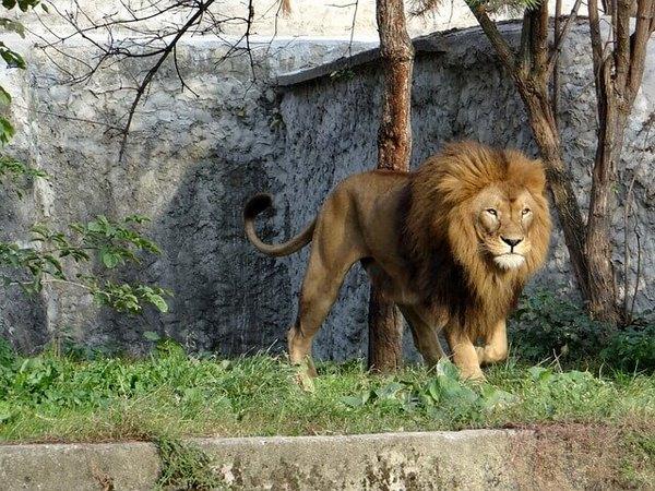 Любовный гороскоп для Льва на февраль 2021